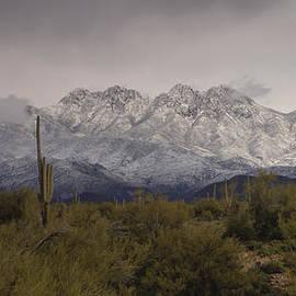 Saija  Lehtonen - Snow Covered Sonoran Desert