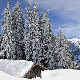 Matthias Hauser - Snow covered trees and mountains in beautiful winter landscape