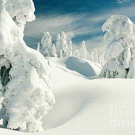 Frank Townsley - Snow encrusted