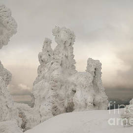Snow Ghost Trees