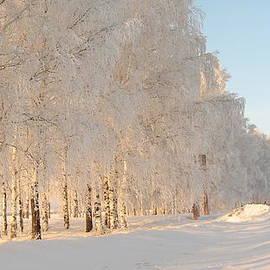 Zina Stromberg - Snow Winter