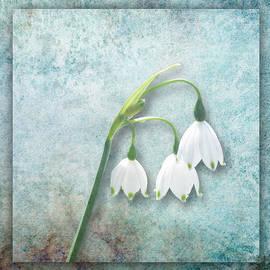 Snowdrop by Lynn Bolt