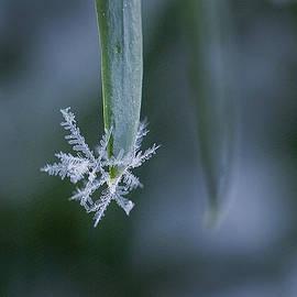 Snowflakes 1 by Jeff Klingler