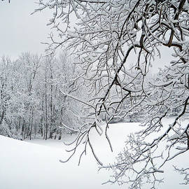 Aimee L Maher Photography and Art Visit ALMGallerydotcom - Snowy Branches