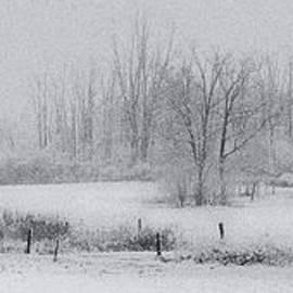 Michele Steffey - Snowy Fields