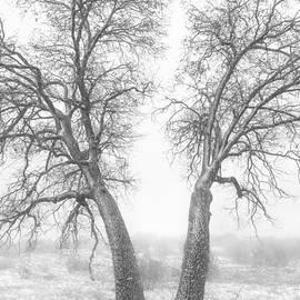 Alexander Kunz - Snowy Oaks
