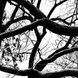 Heather Bridenstine - Snowy Winter Trees