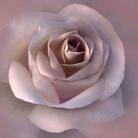 Soft Mauve Pink Rose Flower by Jennie Marie Schell