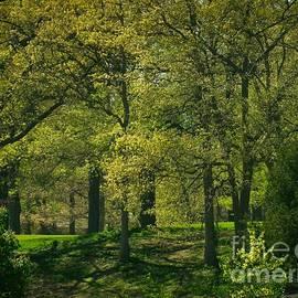 William OBrien - Soft Spring Light