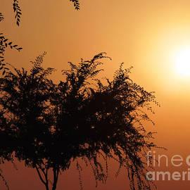 Meghan at FireBonnet Art - Soft Sunrise