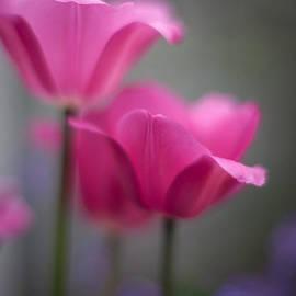 Mike Reid - Soft Tulip Twilight