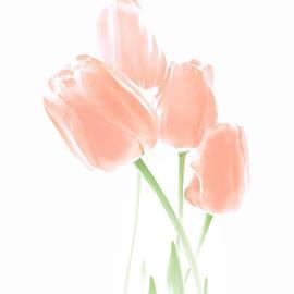 Jennie Marie Schell - Softness of Peach Tulip Flowers