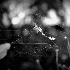 Solitary Web by Lisa Holland-Gillem