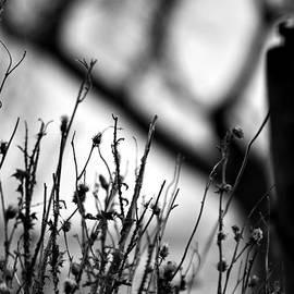 Matthew Blum - Something Wicked This Way Comes