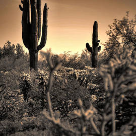 Deb Halloran - Sonoran Sunset
