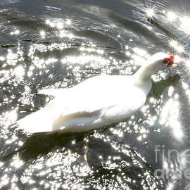 Sparkling Water And Goose by Mary Mikawoz