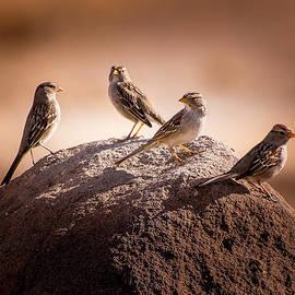 Janis Knight - Sparrow Meeting