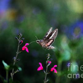 Sphinx Moth And Summer Flowers by Karen Slagle