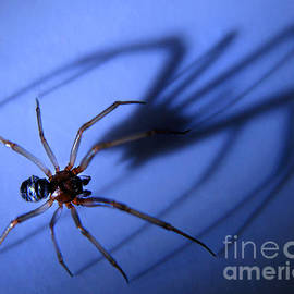 Jennie Breeze - Spider Blue