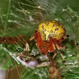 Dan Sproul - Spider