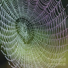 Heiko Koehrer-Wagner - Spider Web