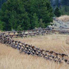 Split Rail Fence by Susan Buscho