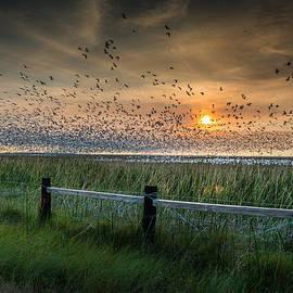 Spooked Geese by Allen Biedrzycki