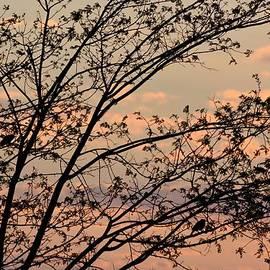 Chandana Arts - Spot the birds..