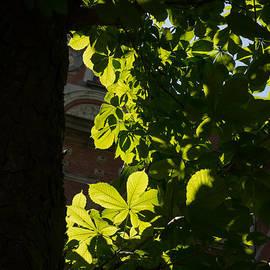 Georgia Mizuleva - Spotlight on a Spring Green Chestnut Tree