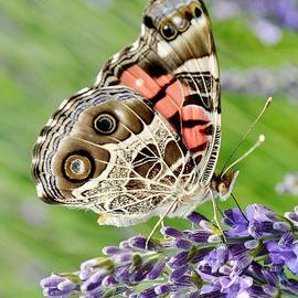 Spotted Butterfly by Kim Bemis