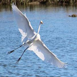 Cynthia Guinn - Spreading Her Wings