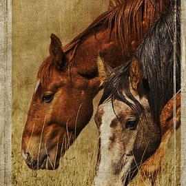 Priscilla Burgers - Spring Creek Basin Wild Horses