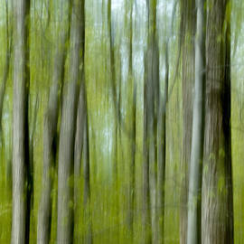 Spring forest abstract by Rob Huntley