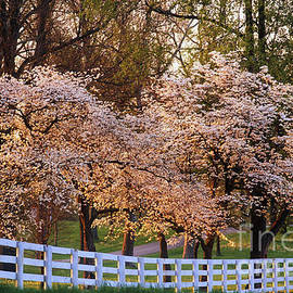 Daniel Dempster - Spring in the Bluegrass - FS000247