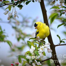 Spring in the Country by Nava Thompson