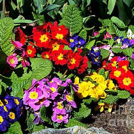 Spring into Color