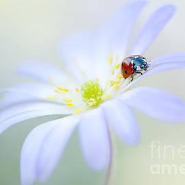 Spring Lady by Jacky Parker