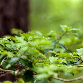 Jiayin Ma - Spring Leaves