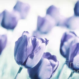 Spring Love II by Angela Doelling AD DESIGN Photo and PhotoArt