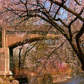 Spring - Meet me under the bridge by Mike Savad