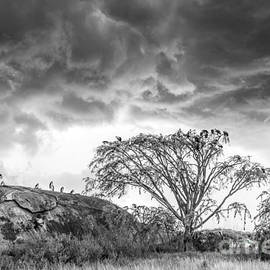 Spring Storm on the Serengeti Plain by Sandra Bronstein