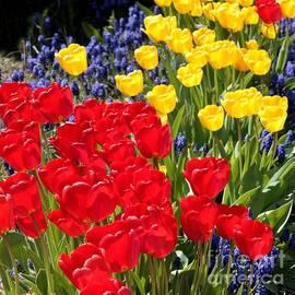 Carol Groenen - Spring Sunshine