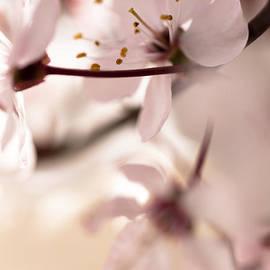 Springtime Blossom by Jan Bickerton