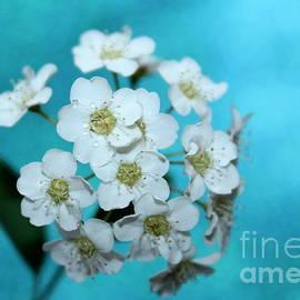 Krissy Katsimbras - Springtime Gift