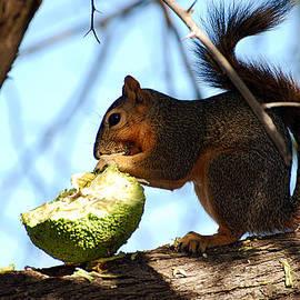 Squirrel's Delicacy by Linda Cox
