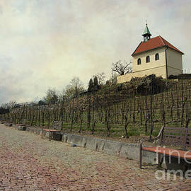 Katerina Vodrazkova - St Claires winery