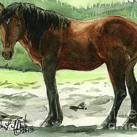 Stallion Of The Clear-cut by Linda L Martin