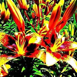 Loretta Bueno - Stargaizers Red and Yellow