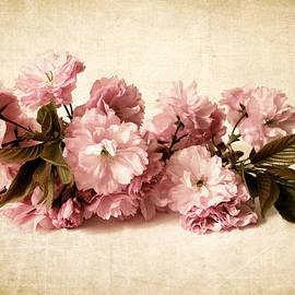Jessica Jenney - Still Life Blossom