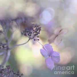 Still pastels by Uma Wirth